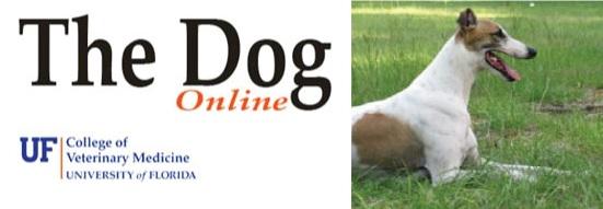 dog-class-website